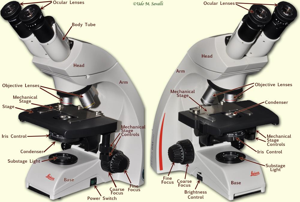 BIO201-Microscope