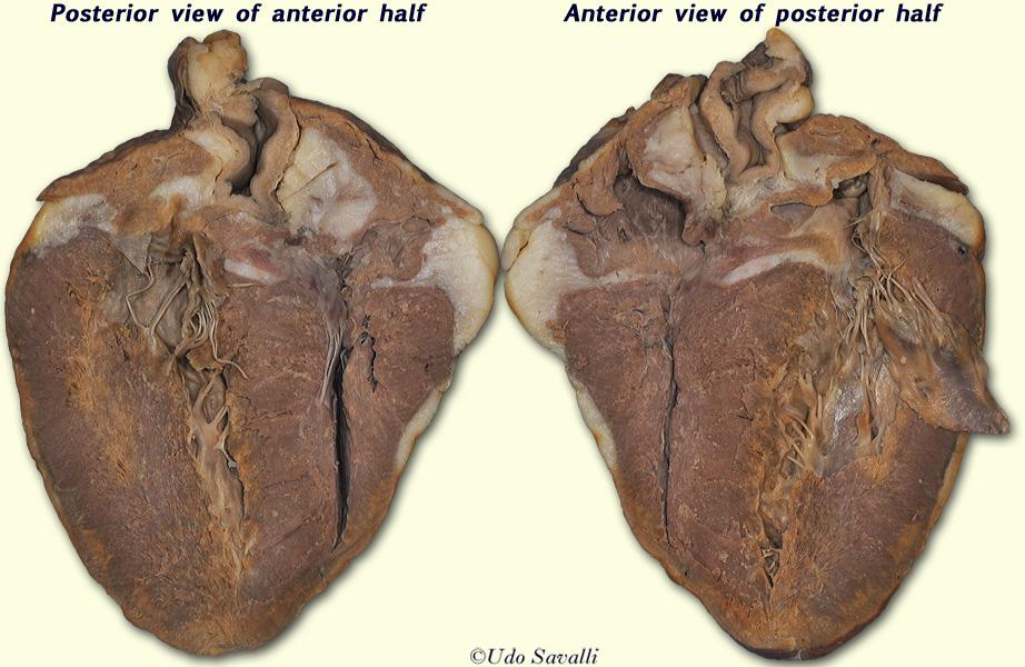 bio202 sheep heart