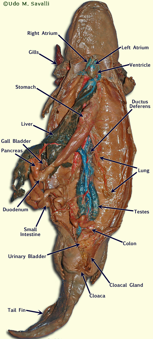 Index of /BIO370/Anatomy/AnatomyImages